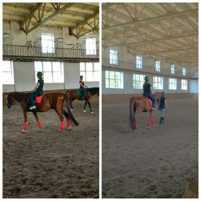 My first try! :) #horses #training