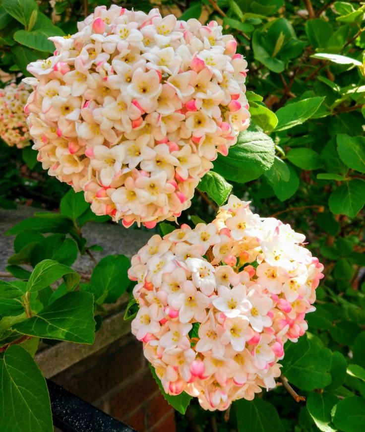 Цветы в Йорквилле, Торонто