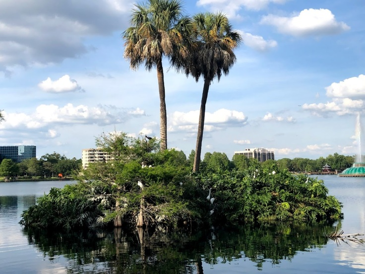 Орландо, даунтаун: парк, оккупированный птицами